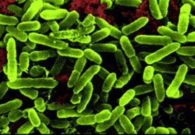Probiotics 101, The basics of probiotics, choosing a probiotic